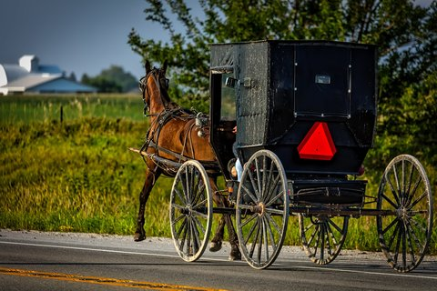 Amish Buggie and Horse